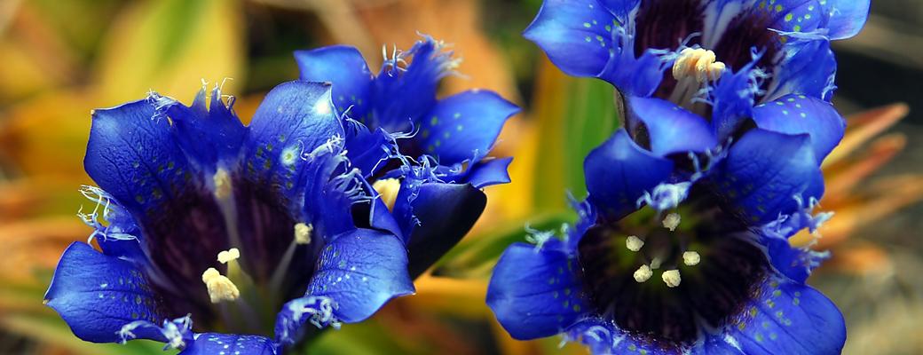 61-flora-fauna-A1